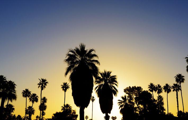 riverside solar palm tree