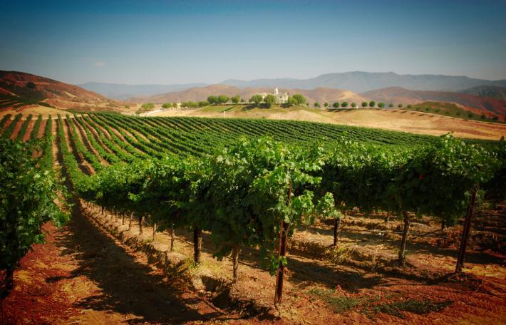 vineyard-solar-energy